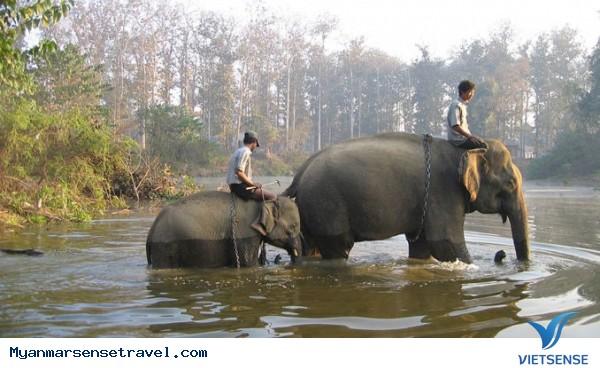 Để được trải nghiệm lý thú cùng Voi hãy đến Myanmar - Ảnh 1