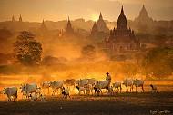 Lý do gì khiến Myanmar hấp dẫn du khách Việt?