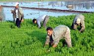 Myanmar Áp Dụng Mức Lương Tối Thiểu Cho Người Lao Động