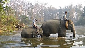 Để được trải nghiệm lý thú cùng Voi hãy đến Myanmar