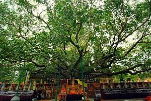 Tìm hiểu lễ tưới cây Bồ Đề tại Myanmar