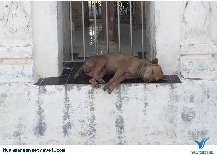 Kì lạ những chú chó ung dung trên đất Phật,ki la nhung chu cho ung dung tren dat phat
