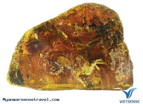 Phát hiện mẫu chim cổ đại trong hổ phách có tuổi thọ 100 triệu năm ở Myanmar,phat hien mau chim co dai trong ho phach co tuoi tho 100 trieu nam o myanmar