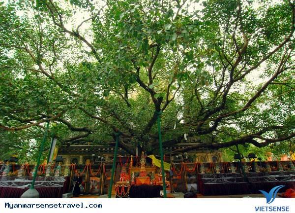 Tìm hiểu lễ tưới cây Bồ Đề tại Myanmar,tim hieu le tuoi cay bo de tai myanmar
